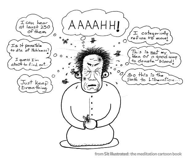 meditation_mosquito